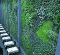 Más de 13.000 plantas para un jardín vertical