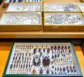 El mayor ejército de coleópteros y lepidópteros