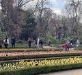 La estrella del Real Jardín Botánico