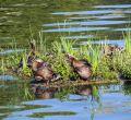 Islas para la biodiversidad madrileña en el lago