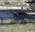 Vertidos contaminantes en el río Guadalix