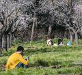 Un paseo por la floreada Quinta de los Molinos
