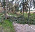 """El Pinar de la Elipa, un parque """"abandonado"""" tras el paso de Filomena"""