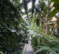 Invernaderos del Real Jardín Botánico