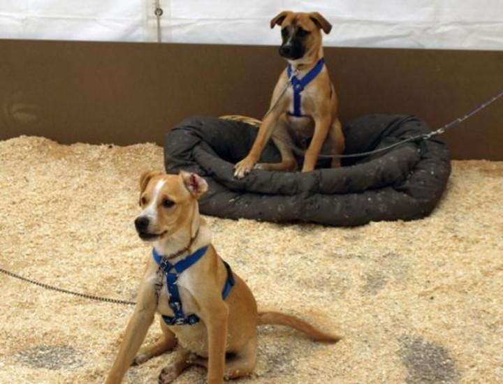 Este fin de semana se celebra en el Paseo de Coches del Retiro el IV Salón de animales de compañía, organizado por la Comunidad de Madrid.