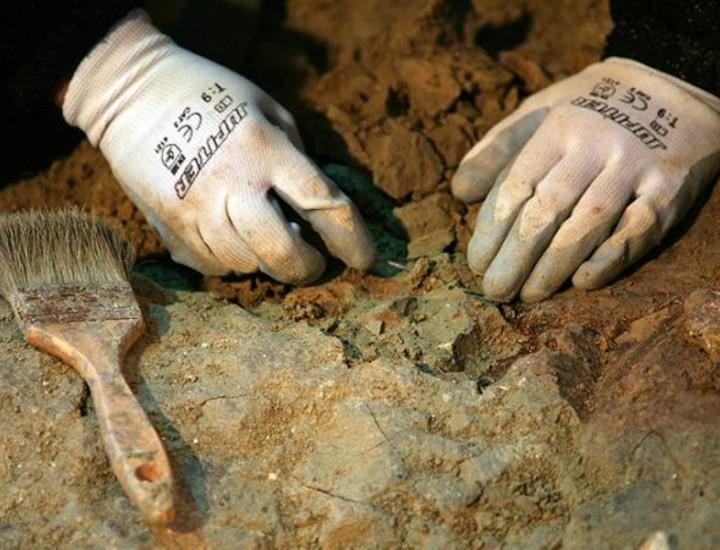 La estación de Carpetana de Metro de Madrid se ha convertido en el mayor yacimiento de restos paleontológicos de la historia del suburbano. Desde el inicio de las obras de mejora de la estación en marzo, los especialistas han encontrado más de 5.000 restos de animales con una antigüedad superior a los 14 millones de años. Entre estos hallazgos, destacan los restos de un deprededador desconocido hasta ahora en la región.