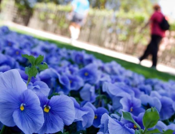 Con la llegada de la primavera y el buen tiempo, son numerosas las personas que se acercan al Parque de El Capricho para hacerse fotos con motivo de bodas y comuniones.