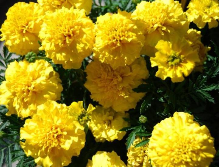 El Ayuntamiento de Madrid va a embellecer la ciudad con casi un millón de plantas de flor de 31 variedades distintas.