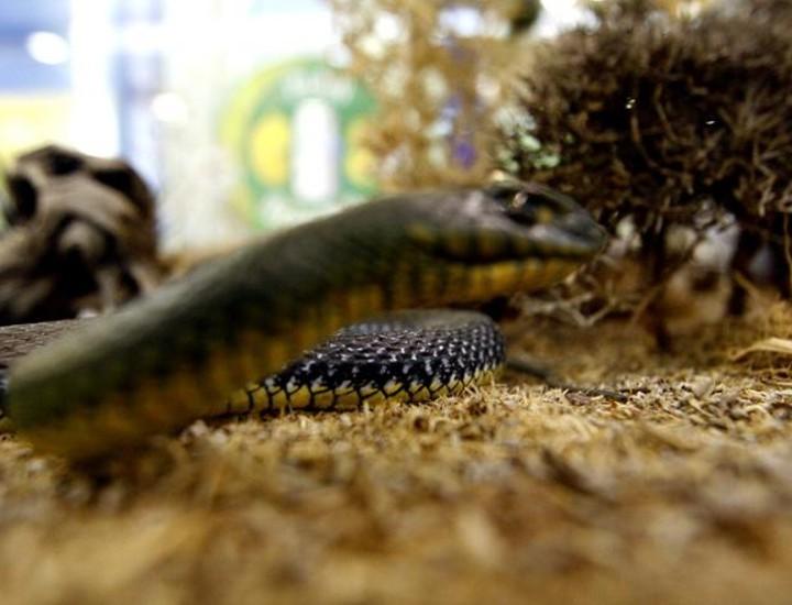 Desde este martes hasta primeros de agosto se puede disfrutar en el Centro Comercial Gran Vía de Hortaleza de una exposición gratuita que cuenta con 60 reproducciones de reptiles y anfibios que viven en nuestro entorno. El objetivo es mostrar a los más pequeños la presión que ejerce el ser humano en el ambiente.