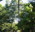 Ecosafari en el Botánico