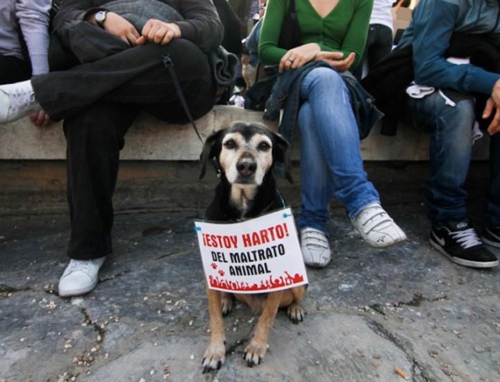 Galería Madridiario - Manifestación contra el maltrato animal -  Manifestación contra el maltrato animal