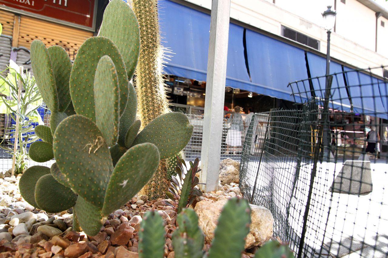 Alcorque adornado con cactus en Antón Martín