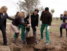 Concluye la reforestación de Bosquesur