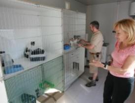 Colonias de felinos en Tres Cantos