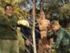 La Dehesa de la Villa y Coslada celebrarán el Día del Árbol