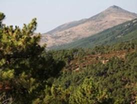 La Comunidad instalará cámaras en el monte para detectar incendios forestales