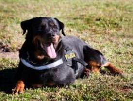 Getafe inicia una campaña contra los excrementos caninos
