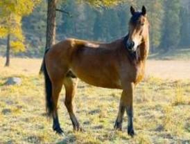 Rescatan a dos caballos y cinco perros abandonados en El Escorial