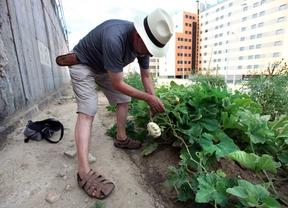 Abierto el plazo para solicitar una de las 15 parcelas para huertos urbanos