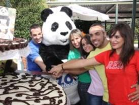 Miles de niños acompañan a los osos panda del Zoo en la celebración de su cumpleaños
