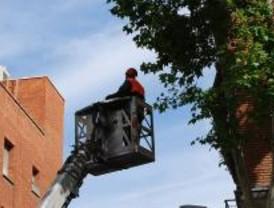 Más de 70 calles se verán afectadas por trabajos de gestión del arbolado