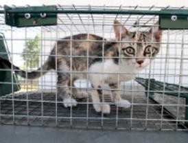 Majadahonda cuida de sus animales