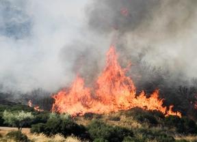 Incendio forestal en Campo Real.