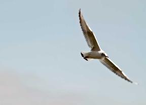 Madrid contará con una red de rutas ornitológicas