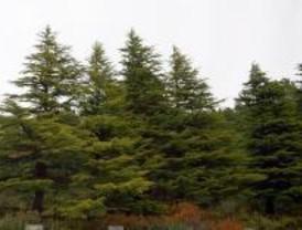 La Comunidad plantará 8.200 árboles cada día, según el Plan de Repoblaciones