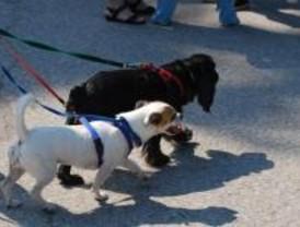 El Ayuntamiento sólo sancionó a tres personas en 2008 por los excrementos de sus perros
