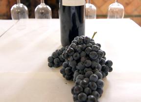 Las Rutas del Vino madrileñas, a examen