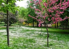 Primavera en el parque del Retiro.