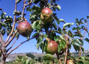 La agroecología madrileña recurre a la ayuda ciudadana