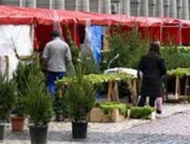 El PSOE pide una campaña de recogida a domicilio de árboles de Navidad