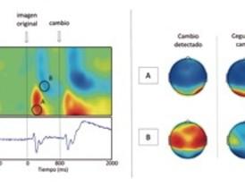 Analizan actividad cerebral en cambios que pasan desapercibidos