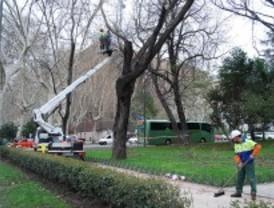 Los trabajos de poda obligarán a cortar más de un centenar de calles esta semana