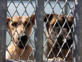 La Comunidad adoptó 1.400 animales en tres meses