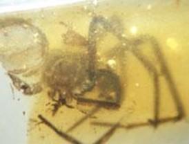 Telas de araña de la época de los dinosaurios