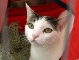 Tres residencias de mascotas fueron sancionadas en 2008