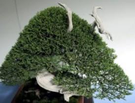 Vuelven los bonsais al parque del Oeste