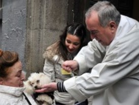 San Antón protege a los animales