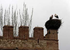 Alcalá presenta la ruta de las cigüeñas por su casco histórico