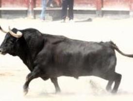 El Ayuntamiento de Leganés se hará cargo de los festejos taurinos de las fiestas