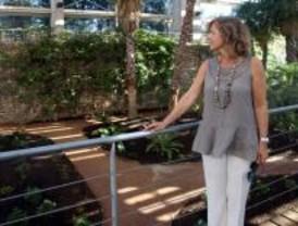 La Estufa Fría del Parque Juan Carlos I abre sus puertas tras ser rehabilitada