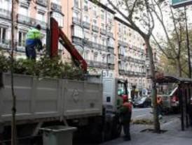 El plan de gestión de arbolado afectará a 80 calles esta semana