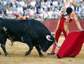 Los toros protagonizan las fiestas patronales de Cenicientos