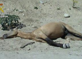 Detenido por maltrato a más de 30 caballos