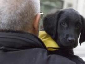 Madrid cuenta con 7.000 perros abandonados al año