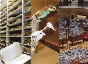 'Museos y colecciones de Historia Natural. Investigación, educación y difusión'