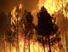 Los incendios forestales cada vez son más grandes y frecuentes